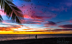 Sanibel Island - The Last Sunrise of 2017 (tropicdiver) Tags: florida island sanibel birds causeway gulfofmexico palmtrees sunrise