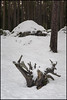 Stubbe och sten (Jonas Thomén) Tags: stubbe stump sten rock stone forest skog träd trees snow snö winter vinter 4min longexposure longexponering natt night lingon lingonris januari january utomhus outdoor