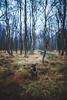 Akira - Bökesjön in the rain - WEB (manuel ek) Tags: nature sweden häckeberga naturreservat nikon manuelekphoto sigma forest dog hund perro hound pinscher