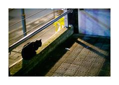 A6000-04702-marco999--2-txiki (elquemira) Tags: sonya6000 planar1450zf planar5014zf planart1450 carlzeissplanart1450 carlzeissplanar5014zf zhongyilensturboii color night urban street urduliz