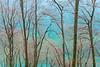 the incredible colours of the baltic sea II (Sandra Bartocha) Tags: sandrabartocha rügen coast coastalforest turquoise winter
