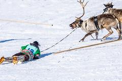 Khanty-116 (Polina K Petrenko) Tags: farnorth ruskinskaya russia siberia culture deer ethnic holiday indigenous khant khanty localpeople nikon reindeer traditional