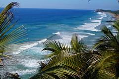 Ixtapa (cielopedernal) Tags: ixtapa zihuatanejo mexico méxico beach playa places sunset atardecer cielo sky animal animales animals reptil reptile iguana cangrejo arena sea sand ocean oceano mar blue crocodile cocodrilo