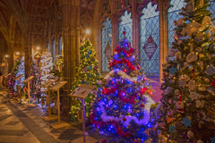 4U5A6409 (bartlett2) Tags: | worcester cathedral christmas trees worcestershire