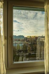 Just behind the window. (pasiak75) Tags: 2017 ptaki sigma12244556 wroclaw birds clouds krajobraz landscape sky windows