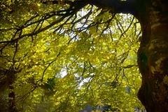 Selva de Oza (Huesca-Pirineos-España) (Carlos M. M.) Tags: selvadeoza huesca aragón pirineos nature naturaleza hdr sony sonyalpha6000 trees