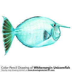 Whitemargin Unicornfish with Color Pencils [Time Lapse] (drawingtutorials101.com) Tags: whitemargin unicornfish animal animals fish fishes sketch sketches sketching sketchs draw drawing drawings color colors coloring how pencil timelapse video