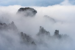 *Secrets of Pandora* (albert.wirtz) Tags: landscape albertwirtz paesaggi paysages china nationalpark zhangjiajienationalforestpark zhangjiajie forest nationalforest natur nature fog mist nebbia niebla brume bruma brouillard secretsofpandora mountains foggy misty mysterious mystical jamescameron pandora movie filmlocation nikon d810 avatar pandoramountains cili hunan coppercloudsilvernsun laniebla fineartphotography