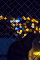 Cat at the Window & Lights (CamposPedro) Tags: bh beaga belohorizonte mg minasgerais brasil brazil eunonatgeo natgeobrasil canonbrasil canonbr canon cat gato sombra shadow light lights luz luzes cidade city night noite janela window citylight nightlight