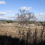 Savanna Meadow thumbnail