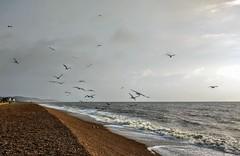 Seagulls on the beach (wendyhayes2) Tags: seagulls britishcoast beach birds shore sky sea clouds hythe kent