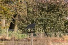 82a (Marjon van der Vegt) Tags: natuur clingsebossen herfst paddenstoelen kleuren bladeren bomen wolken boerderij