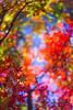 memories (D.Kafka) Tags: summitar leica digital m9 memory memories autumn color colors 502 bokeh