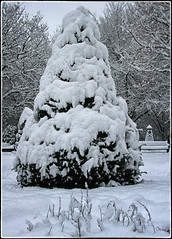 is Christmas here yet .... (Barbara Fallas) Tags: 2010 was heavy winter