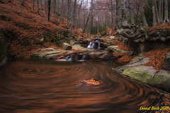 The game of the leaves. (Ernest Bech) Tags: catalunya elmontseny river riu rocks roques fulles leaves saltdaigua waterfall landscape longexposure llargaexposició