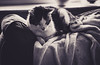 Chillaxing (Captured by AMK) Tags: cats felines monochrome blackandwhite pets petphotography project365