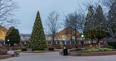 Christmas Lights Smyrna (JavaJoba) Tags: atlanta chrastmastrees christmasimages christmaslights jackkennard marietta smyrna nikond5200 travellocal ga usa