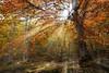 Hayedo del Moncayo (Inmacor) Tags: hayedo otoño arbol tree autumn inmacor bosque sol luz light fuego