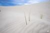 Little Sahara, Kangaroo Island, Australia (Matz88) Tags: verde little sahara sand australia dune dunes kangaroo island