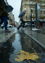 Movement and change 2 (ido1) Tags: tree change fall autumn walk puddle cigarette but water reflection paris move movement step love