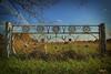 Abandoned Farm Gate (Earthmonster Studio) Tags: gate ozarks farm missouri rural iron steel craft art earthmonster