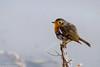 Petirrojo (Frenchy&Jesus) Tags: petirrojo aves pájaro color