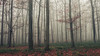 In the Woods (Netsrak) Tags: baum bäume eifel europa europe herbst landschaft natur nebel wald autumn fall fog landscape mist nature woods