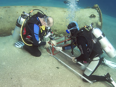 15dec04a (KnyazevDA) Tags: disability diver diving disabled handicapped underwater redsea hanukkah hanukah menorah lights candles israel eilat etgarim cmas amputee paraplegia paraplegic