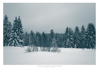 Winter Forest, Ore Mountains
