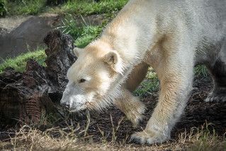 Stealthy Bear