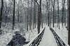 Merry Christmas! (Matt Champlin) Tags: christmas merrychristmas winterwonderland winter beautiful pure peace peaceful hike hiking love life family friends canon 2017 new year eriecanal