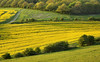 Yellow Ribbon (Alan MacKenzie) Tags: southdowns landscape sussex farm oilseed yellow fields rural spring may