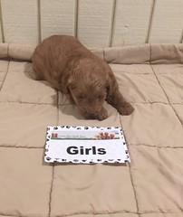 Muddy Girl pic 3 12-31