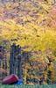 End Of Season (rickhanger) Tags: canoes autumn fall trees boats