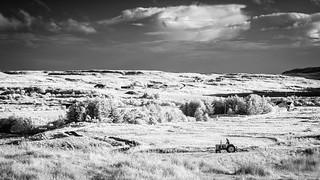2017 Skye - Making Hay While The Sun Shines