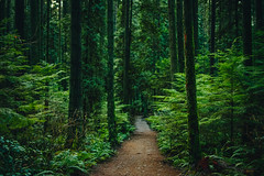 Forest Trail (Viv Lynch) Tags: canada britishcolumbia vancouver vancity westcoast pacificspiritregionalpark forest park trees outdoor hiking bc pacific nature