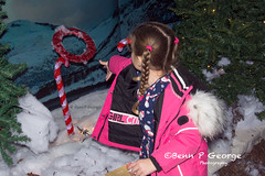 SANTAS-GROTTO-9-12-17-DOBBIES-KINGS-LYNN-(4) (Benn P George Photography) Tags: santasgrotto kingslynn 91217 bennpgeorgephotography santa christmas family georges