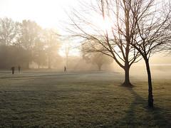 Morning Walk (Alemap.1) Tags: landscape mist fog light rays sun trees