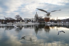 First snow in Washington DC 2017 (JPShen) Tags: christmas tree morning winter first snow seagulls reflections uscapitol