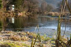 Schönberg (Harald Reichmann) Tags: niederösterreich schönberg kamp fluss wasser landschaft herbst ufer hütte natur schilf boot kälte reif frost