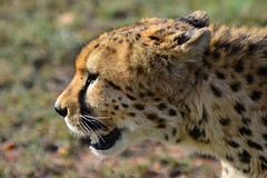 DDR_4167 (Santiago Sanz Romero) Tags: kenya wildlife animales ngc