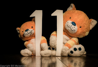 11 Day Eleven (12)