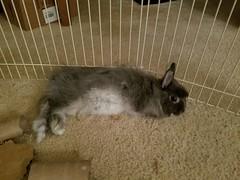 Max (Pinky Earl) Tags: rabbit bunny bun lapin usagi conejo