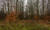 The depth of the forest (Marco van Beek) Tags: mist nature forest autumn bushes holland landscape merry xmas christmas new year cold fog