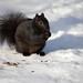 Nuts 'n' Seeds will keep me warm...