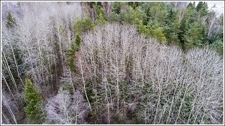 20171225_1260_Forest