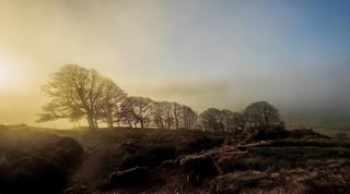 Morning Mist.....