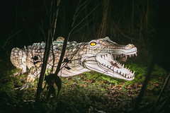 Wild Lights (Strangelove 1981) Tags: 2017 dublinzoo ireland wildlights zoo night lights glow light animals festival crocodile