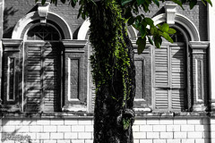 A Drop of Green (smzoha) Tags: building architecture nature greenery green leaves tree bark blackandwhite selective color abstract ancient windows shut postprocessed black white bricks design 7dwf