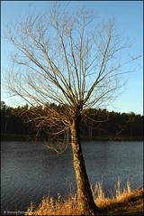 DSC_7036 (facebook.com/DorotaOstrowskaFoto) Tags: rejów skarżyskokamienna zalew zalewrejowski plaża drzewa woda świętokrzyskie poland spacer